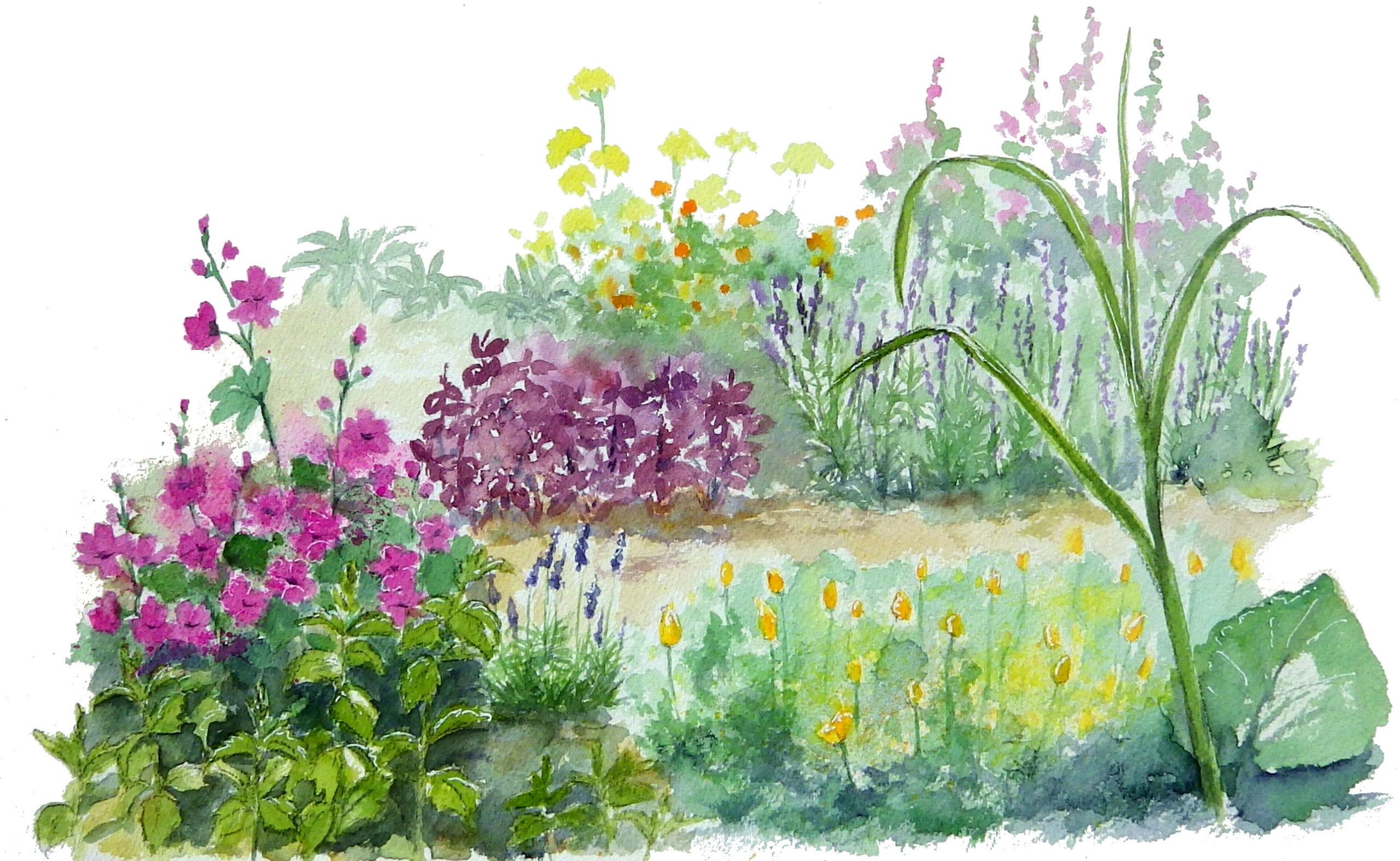 Un jardin sauvage - Microferme de plantes aromatiques et médicinales